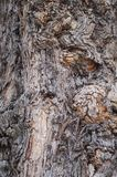 Kieferbeschaffenheit, Baum knackte, alte Baumhaut Lizenzfreie Stockbilder