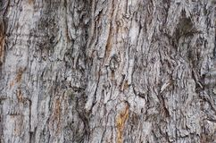 Kieferbeschaffenheit, Baum knackte, alte Baumhaut stockfotografie