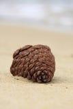 Kieferkegel auf dem Strand Lizenzfreies Stockfoto
