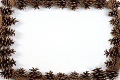 Kieferkegel Feld Stockfotografie