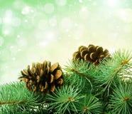 Kieferkegel und -tannenbaum Stockfoto