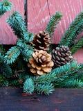 Kieferkegel und Weihnachtsbaumzweig Stockbilder