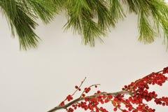 Kiefernäste, die Spitze des Bildes mit weißem Hintergrund gestalten Viele Raum für Kopie lizenzfreies stockfoto