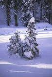 Kiefern abgedeckt im Schnee Lizenzfreies Stockbild