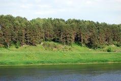 Kiefern auf dem Hügel entlang der Bank des Flusses von Volga Eine Sommerlandschaft im Staritsky-Bereich Tver Region Lizenzfreie Stockfotos
