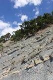 Kiefern auf die Oberseite des Felsens Stockfotografie