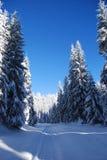 Kiefern deckten gefrorenen Schnee ab Stockbild
