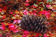 Kiefern-Kegel in den Blumenblättern Stockfoto