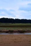 Kiefern nahe dem Strand in einem stürmischen Wetter, Nordmeer, Holkham-Strand, Vereinigtes Königreich Lizenzfreie Stockfotos