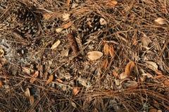 Kiefern-Nesseln, Blätter und Schmutz-Laubdecken-Hintergrund stockbild
