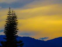 Kiefern-Sonnenuntergang Stockbild