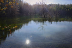 Kiefern und Bäume auf der Bank von Teich Lizenzfreie Stockfotografie