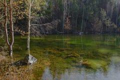 Kiefern und Bäume auf der Bank von Teich Stockfoto