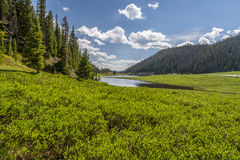Kiefern und der Colorado Lizenzfreie Stockfotos