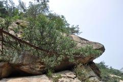 Kiefern und Flusssteine Stockbilder