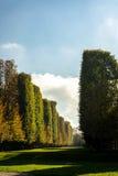Kiefern und Zypressen, die eine landschaftlich gestaltete Promenade zeichnen Lizenzfreies Stockfoto