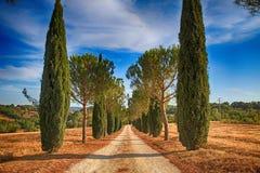 Kiefern- und Zypressenbaumreihen und Landstraße, Toskana, Italien lizenzfreie stockfotografie