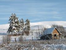 Kiefern unter Schnee Lizenzfreie Stockfotos