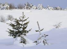 Kiefern unter Schnee stockfotografie