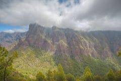 Kiefern-Wald bei Caldera de Taburiente Stockbilder