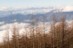 Kiefern-Wald und Berg Lizenzfreie Stockfotos