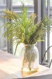 Kiefernblatt im Vase stockbilder