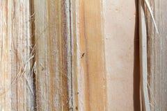 Kiefernbruch-Holzbeschaffenheit Stockbilder