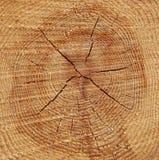 Kiefernholz-Baum-Ring-Hintergrund Lizenzfreie Stockfotos