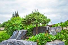 Kiefernholz mit geformter Ordnungskrone unter Naturstein Stockbild