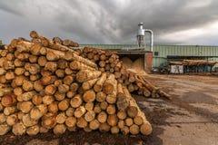 Kiefernholzsägemühle mit Maschinerie für die Verarbeitung des Holzes stockfotos