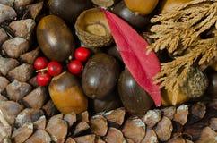 Kiefernkegel, Eicheln und rote Beere stockfoto