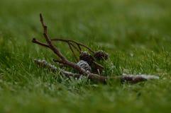 Kiefernkegel eingefroren im Gras Lizenzfreie Stockbilder