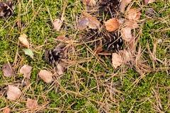 Kiefernkegel, Nadeln und trockene Blätter auf dem Moos stockbild