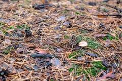 Kiefernkegel nahe dem Pilz im Wald Lizenzfreies Stockbild