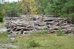 Kiefernklotz liegen in der Masse in den Nadelbäumen protokollieren stockfotografie