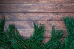 Kiefernniederlassung auf hölzernem Hintergrund Stockbild