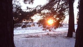 Kiefernniederlassung bei Sonnenuntergang, Wald des verschneiten Winters, fallende Schneeflocken, die in der Sonne funkeln stock footage