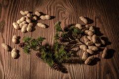 Kiefernniederlassung mit Kiefernkegeln und -nüssen auf einem hölzernen Hintergrund 2 Lizenzfreies Stockfoto