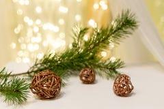 Kiefernniederlassung mit Weihnachtslichtern im Hintergrund lizenzfreie stockbilder