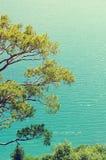 Kiefernniederlassungen gegen das Meer Lizenzfreies Stockfoto