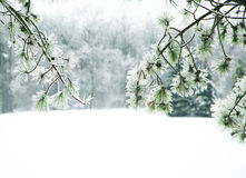 Kiefernniederlassungen umfasst mit Eis Lizenzfreie Stockfotos