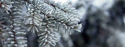 Kiefernniederlassungen umfasst mit Reifkristallen Lizenzfreie Stockbilder