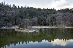 Kiefernwälder und seine Reflexionen  stockfotografie