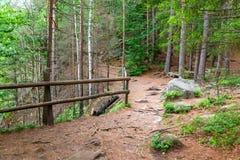 Kiefernwald Lizenzfreies Stockfoto