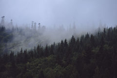 Kiefernwald auf dem Berg übersteigt im Nebel Stockfotografie