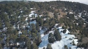Kiefernwald auf Spitze des Berges in der Tageszeit, Schnee liegt auf dem Boden, Vogelperspektive stock footage