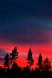 Kiefernwald auf tiefrotem Himmel Stockbilder