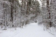 Kiefernwald bedeckt mit Schnee Lizenzfreies Stockfoto
