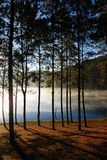 Kiefernwald bei Pang Ung, Mea Hong Son Province, Thailand Stockfotos