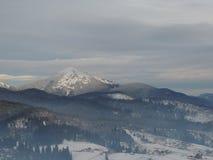 Kiefernwald in den Bergen Stockfotos